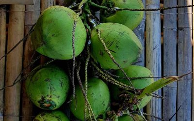 "Nuts About ""Buko"""